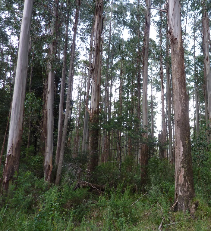 Forest in the Central Highlands surveyed for threatened species