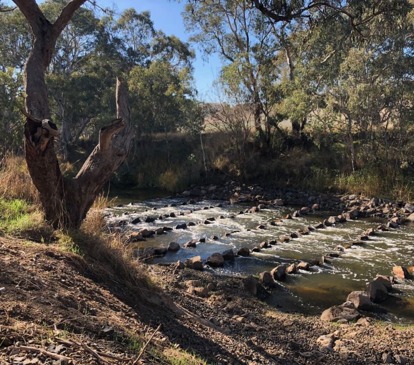 This fishway on the Glenelg River at Sandford has updated Gauge No 238202