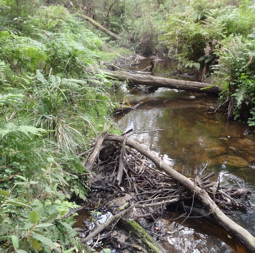 The branches and logs in this stream will help create a healthy waterway
