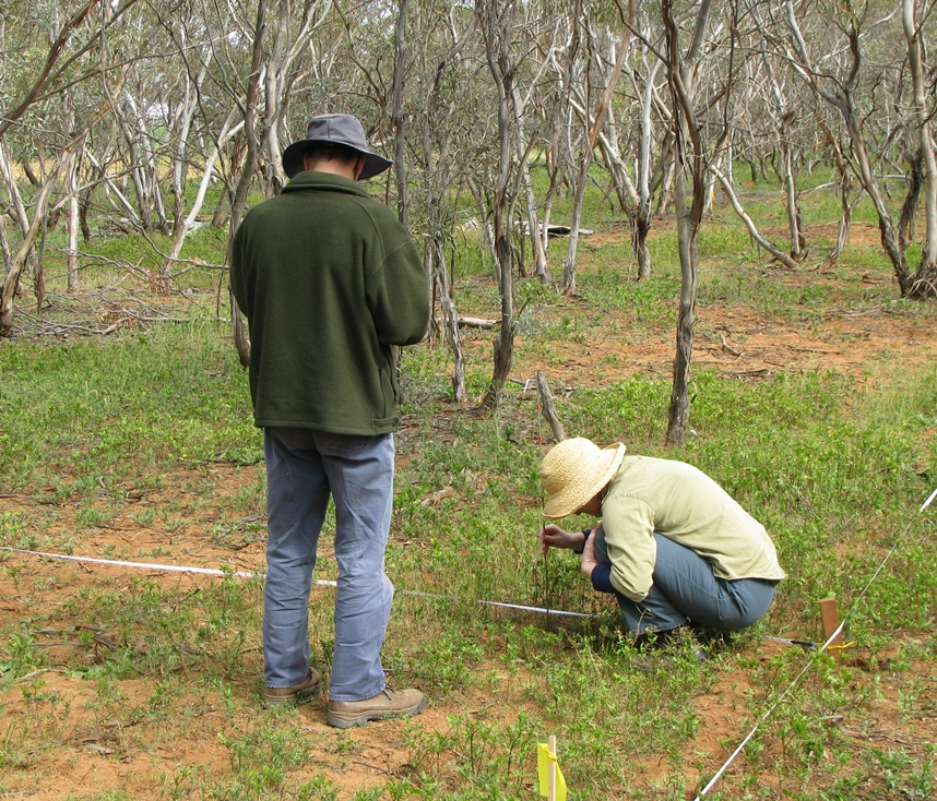 Testing the plant species cover and abundance component of the vegetation monitoring technique