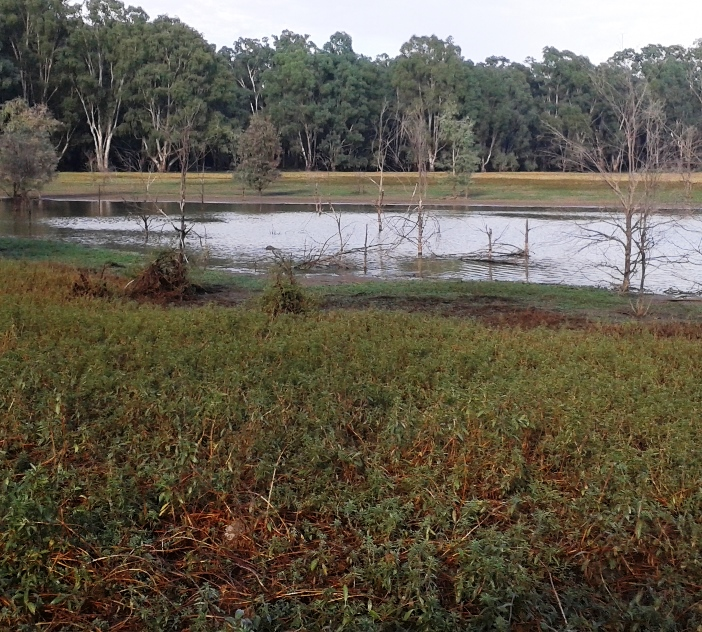 A lake in Barmah-Millewa Forest