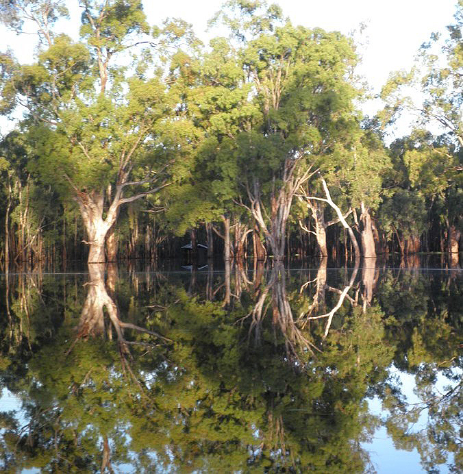 Inundated floodplain in the Barmah-Millewa Forest