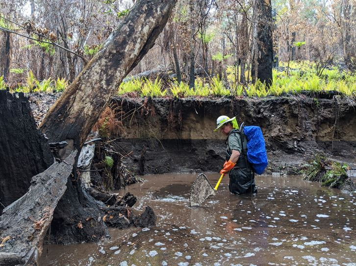 Looking for fish in a fire affected stream after the 2019-20 bushfires in Victoria
