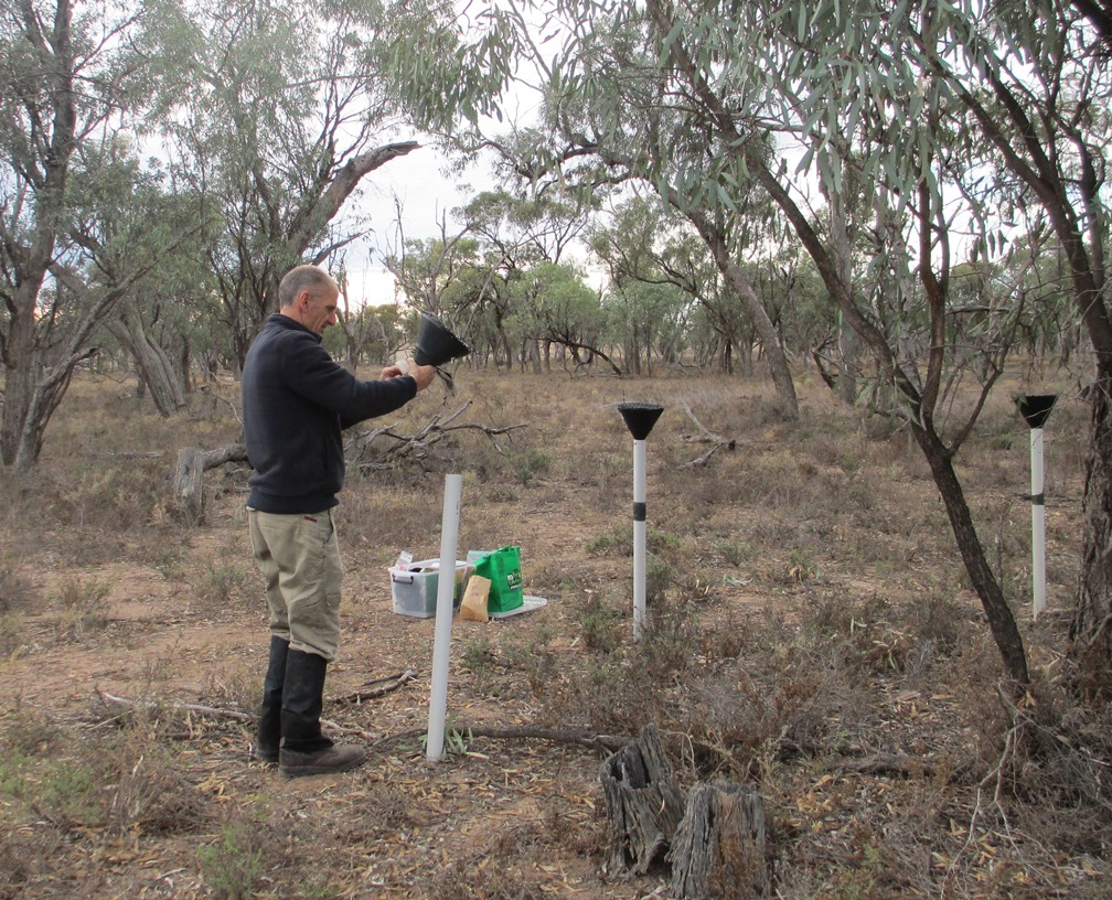 A seed trap used to monitor the health of Black Box woodlands
