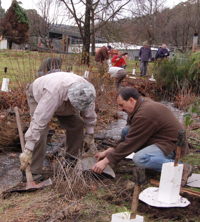Community members replanting alongside a stream as part of the Native Fish Strategy