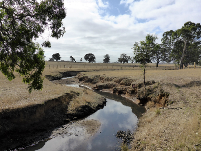 Image of a denuded creek in a paddock