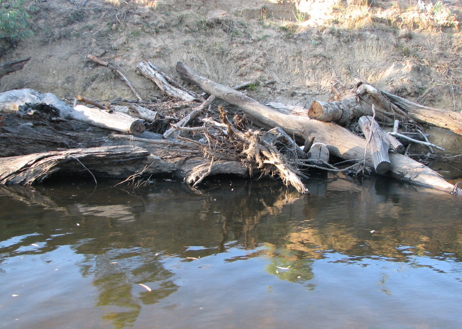 These logs were place here to improve bank stability and fish habitat