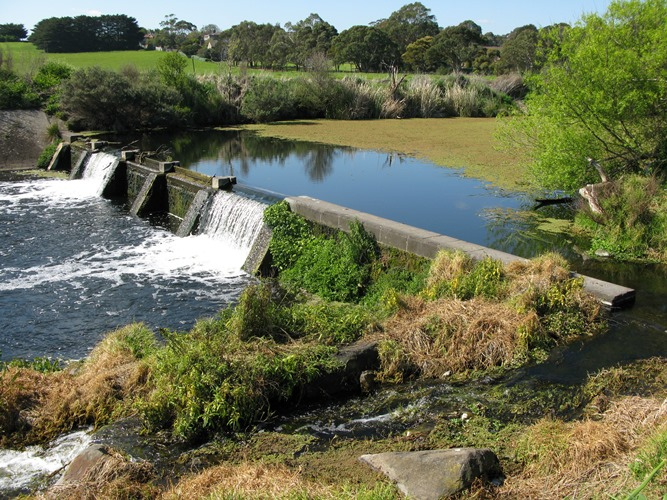 Barriers, like this one on the Merri River estuary in western Victoria can restrict water or biota movement