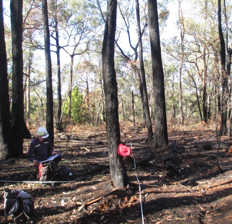 A study site being surveyed after a planned burn