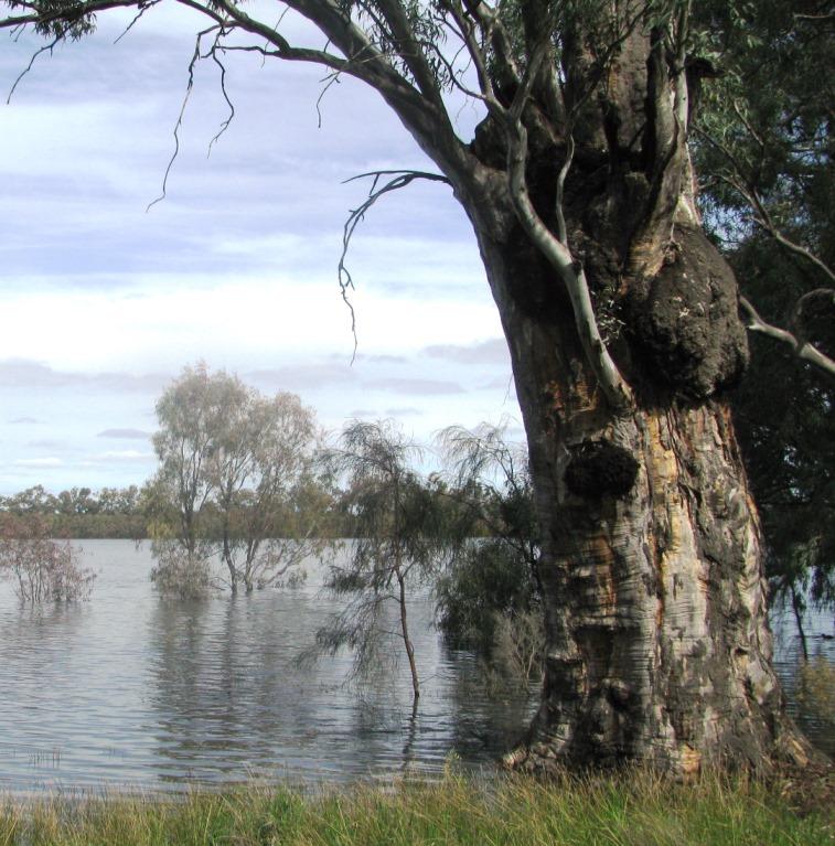 Lake within Hattah-Kulkyn National Park