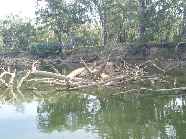 Large collection of timber in a river