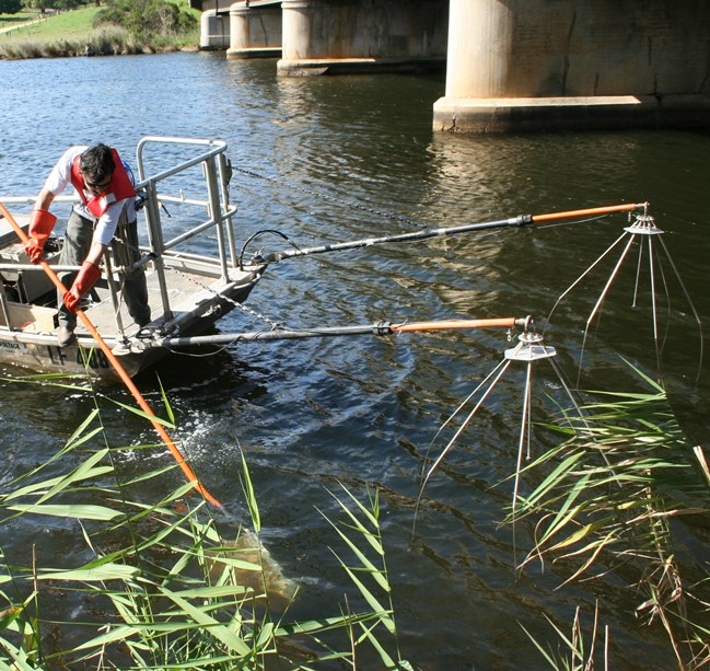 he Grassl electrofishing unit in operation in the Nicholson River estuary